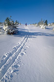Ski tracks in Hagadalen, Uppsala